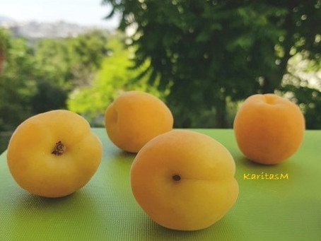 Yummy Apricots!