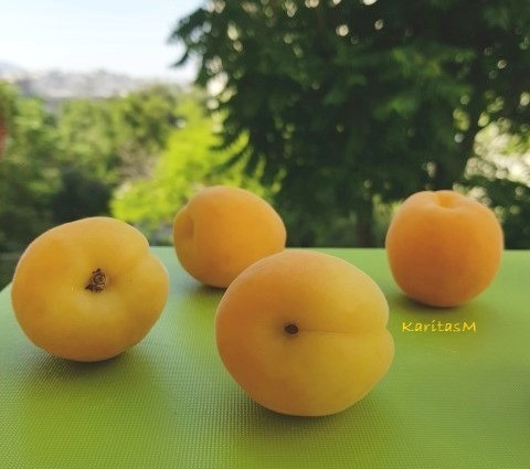 Fresh Apricots - a great summer fruit!