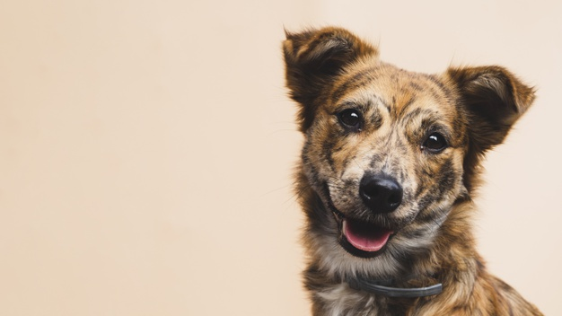 friendly-dog-with-tongue-out-copy-space_