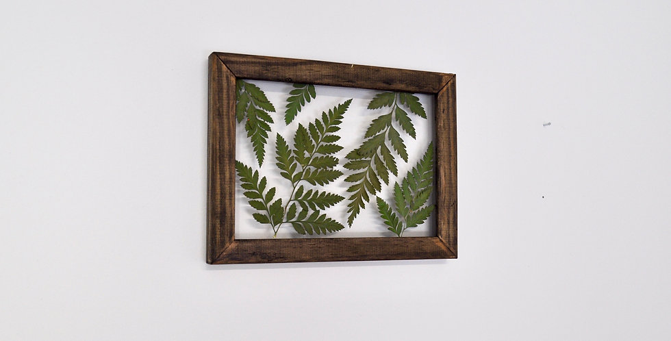 5 x 7 Framed Fern