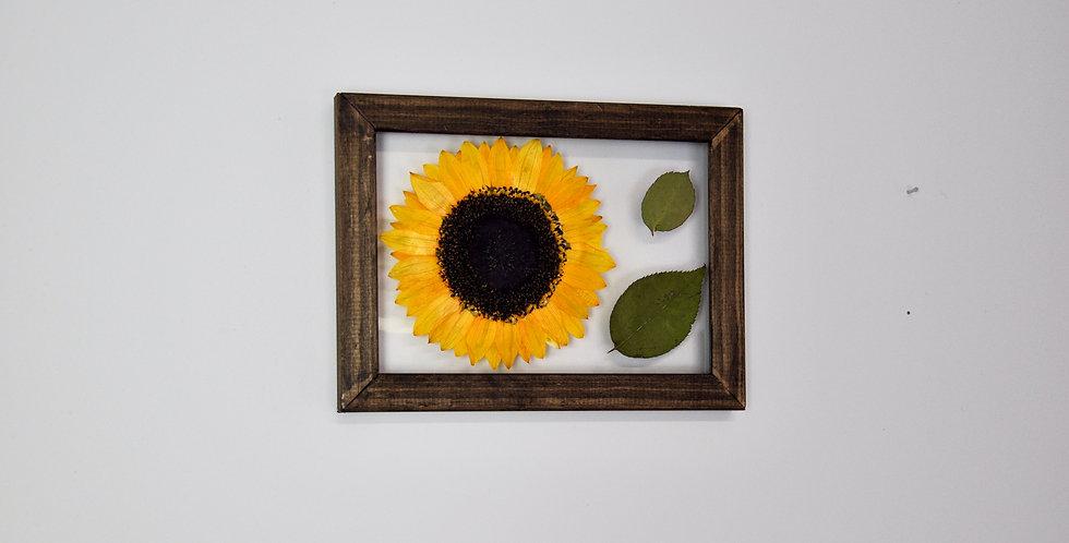 5 x 7 Framed Sunflower