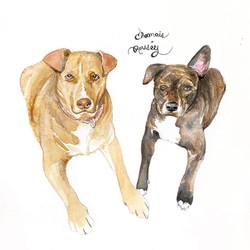 Chamois & Rousey