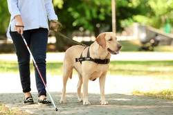 guide-dog-helping-blind-woman