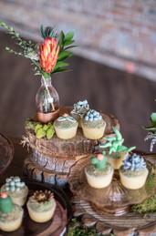 Sugar Succulent Cupcakes