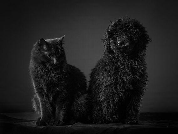 black-dog-black-cat-1024x768.jpg