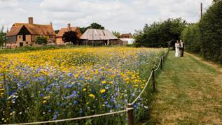 meadow 6.jpg