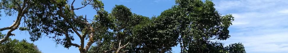 Além de permitir a travessia de turistas da vila até a praia da Guarda do Embaú, o Rio da Madre também proporciona deliciosos passeios de barco. Foto: Acervo da Pousada  .