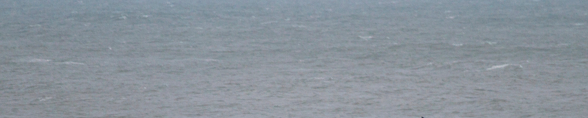 De julho a outubro, é possível  observar  baleias na praia da Guarda do Embaú. Com sorte, o turista pode apreciar um incível show bem à sua frente! Foto: Plínio Bordin  .
