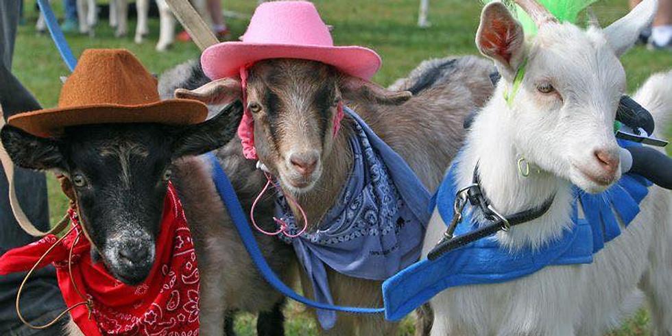 Halloween Goat Yoga