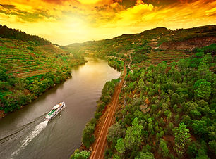 Vineyards in the Valley of the River Dou
