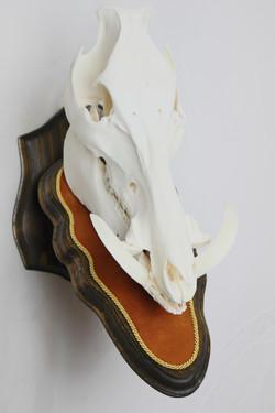 Hog Euro w/ Buck Skin Suede Leather