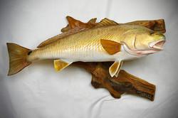 "30"" Redfish Replica"