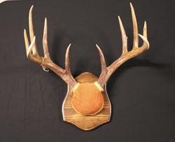Wooden Plaque Antler Mount