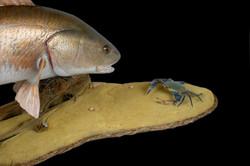 Custom Table Pedestal - Texas Redfish & Crab
