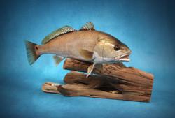 Texas Redfish Replica
