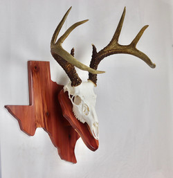 Texas Cedar Euro Mount