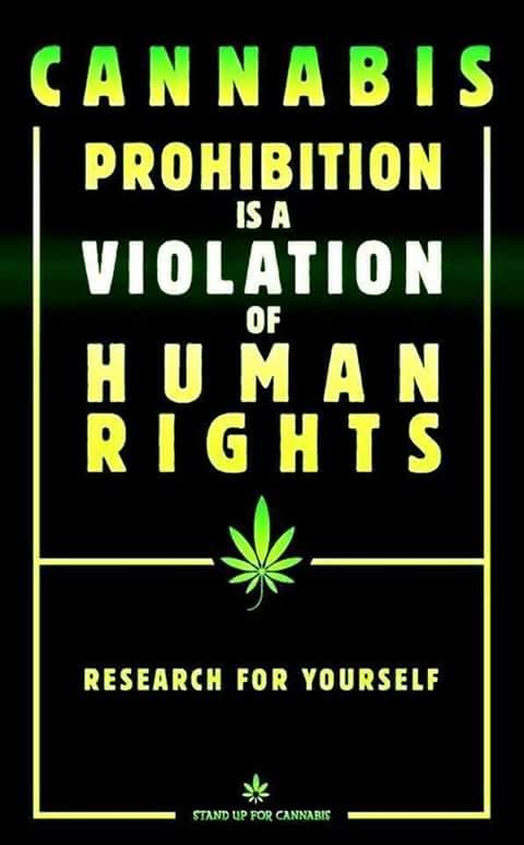 D9E cannabis human rights