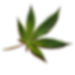 107-1070151_cannabis-png-image-file-high