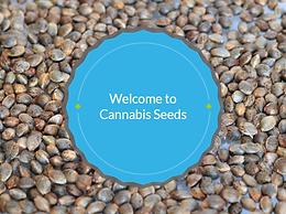 Cannabis Seeds Training Video