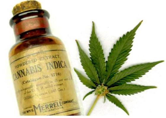 SA Clinical Cannabis Convention - Ep 8