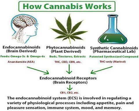 D9E How Cannabis Dagga Works