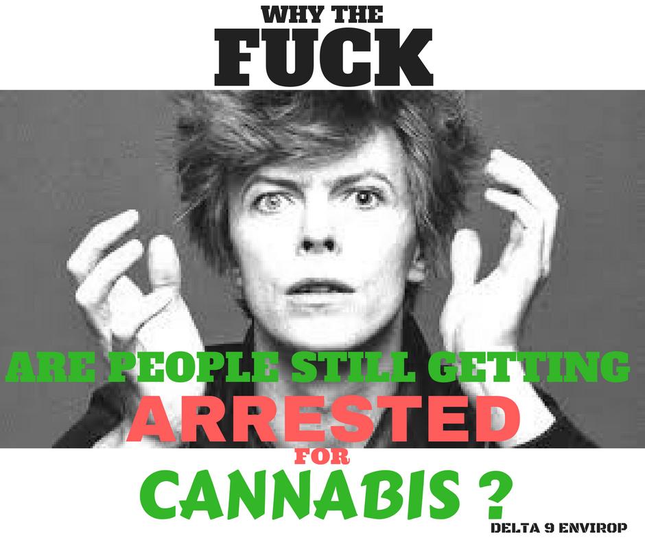Delta 9 Envirop meme david bowie cannabis illegal