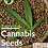 Thumbnail: Cannabis Seeds Training
