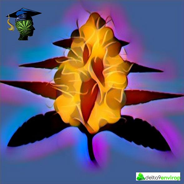 Cannabis Flowering Training