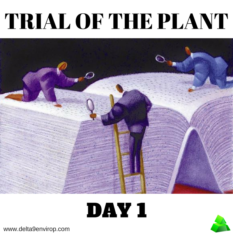 Delta 9 Envirop meme trial of the plant day 1