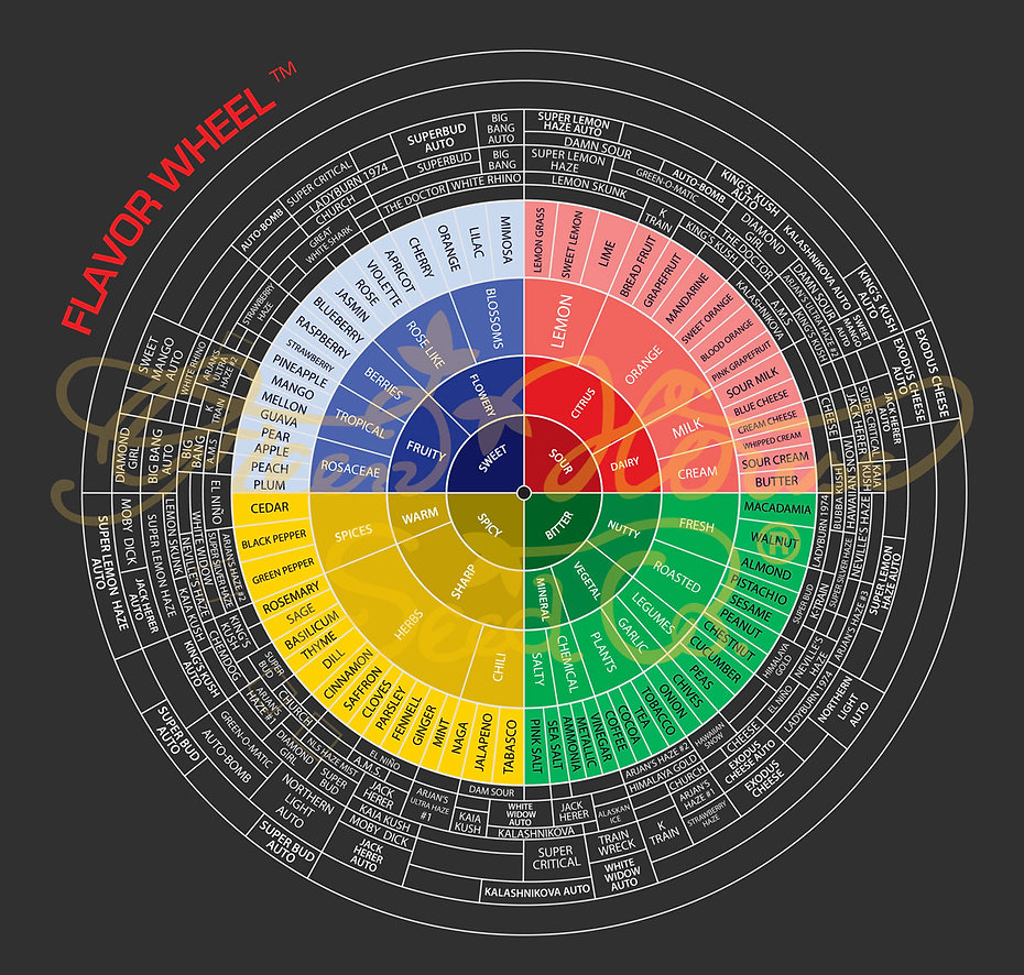 Cannabis str.ain flavour wheel chart.