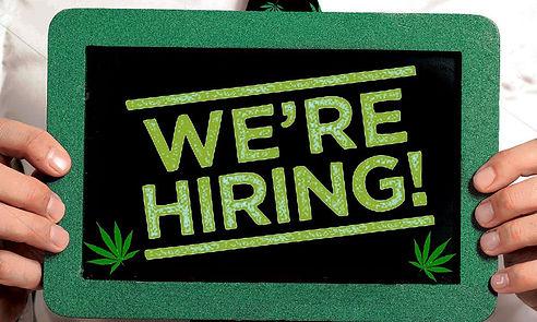 D9E__Delta_9_Envirop__cannabis_careers__