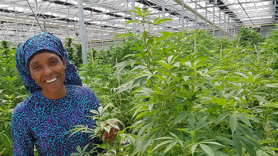 Is SA's Largest Medical Cannabis Grow For Research Or Profit?