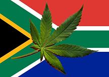 SA Cannabis.png