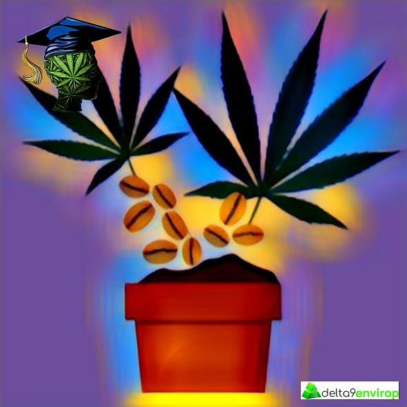 Cannabis Seeds Training