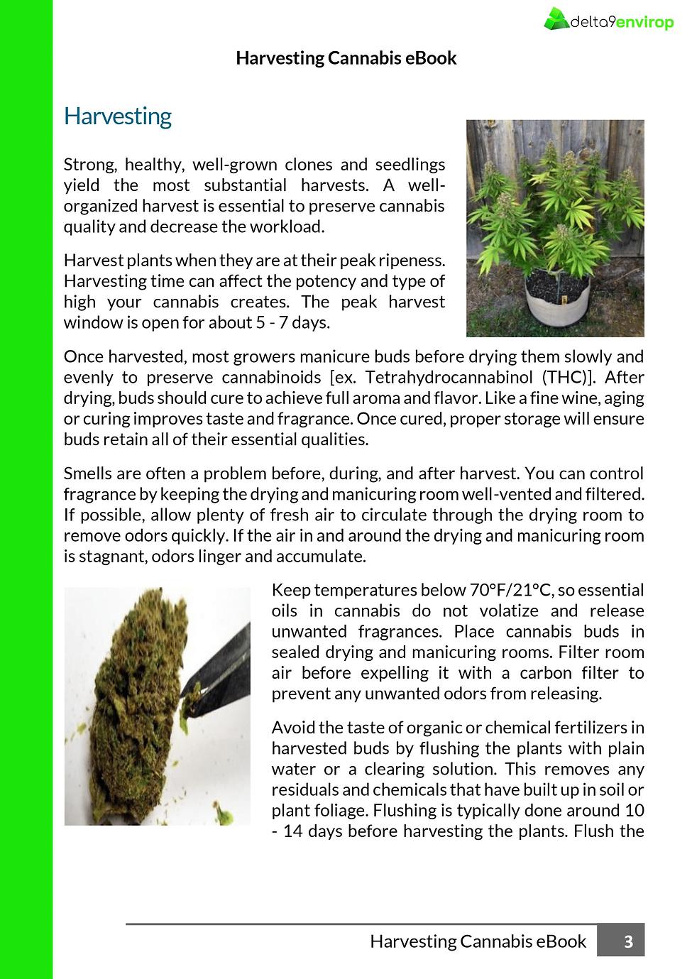 D9E__Delta_9_Envirop__Cannabis_Harvestin