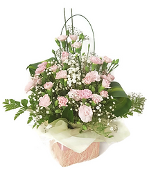 Spray Carnation Deluxe Box.png