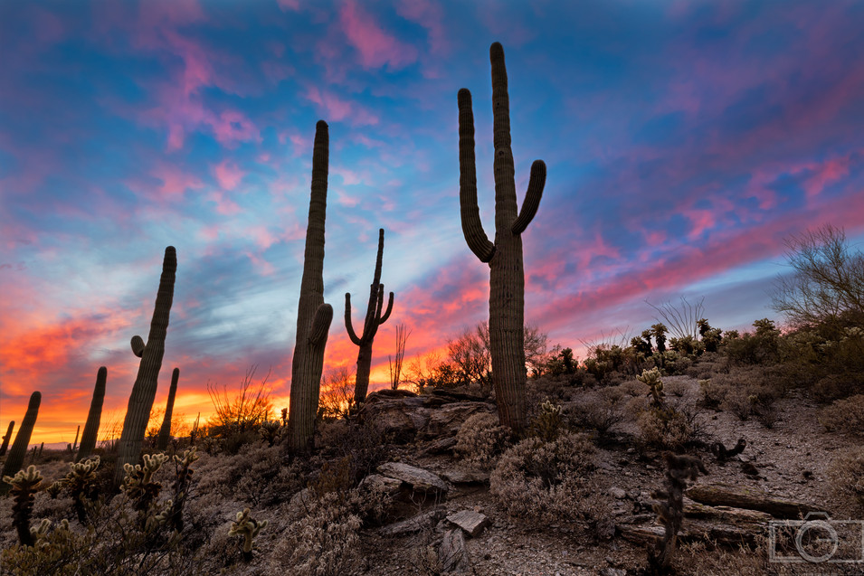saguaro cactus sunset colorful sky desert hillside saguaro national park tucson arizona landscape photographer