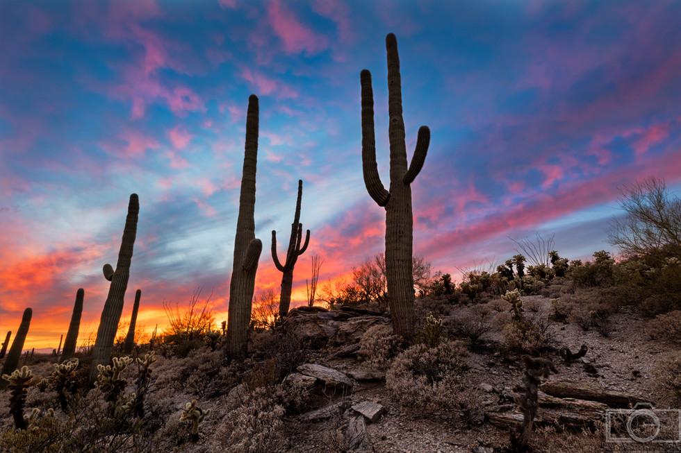 saguaro cactus sunset colorful sky desert hillside saguaro national park tucson arizona landscape photographer