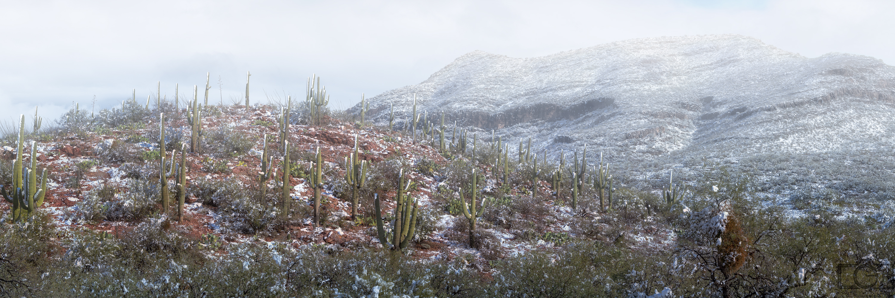 vail tucson snow covered saguaro