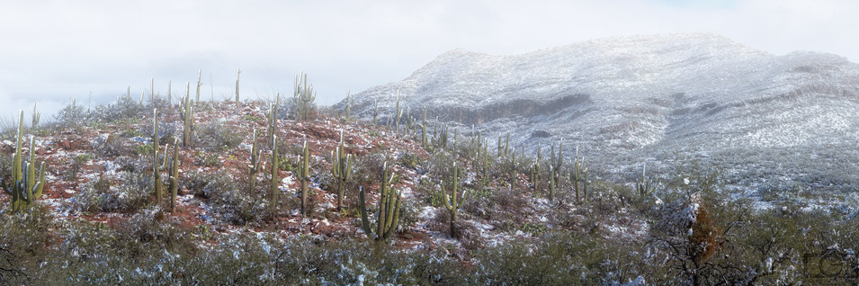 vail-saguaro snow pano-wm.jpg