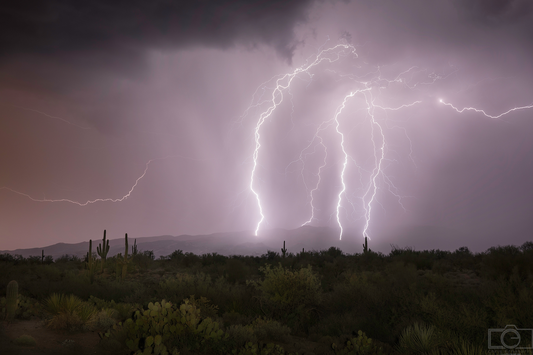 desert monsoon saguaro lightning
