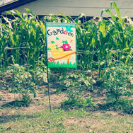 Our homes enjoy tending their own gardens.