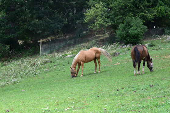 Two of our seven horses.