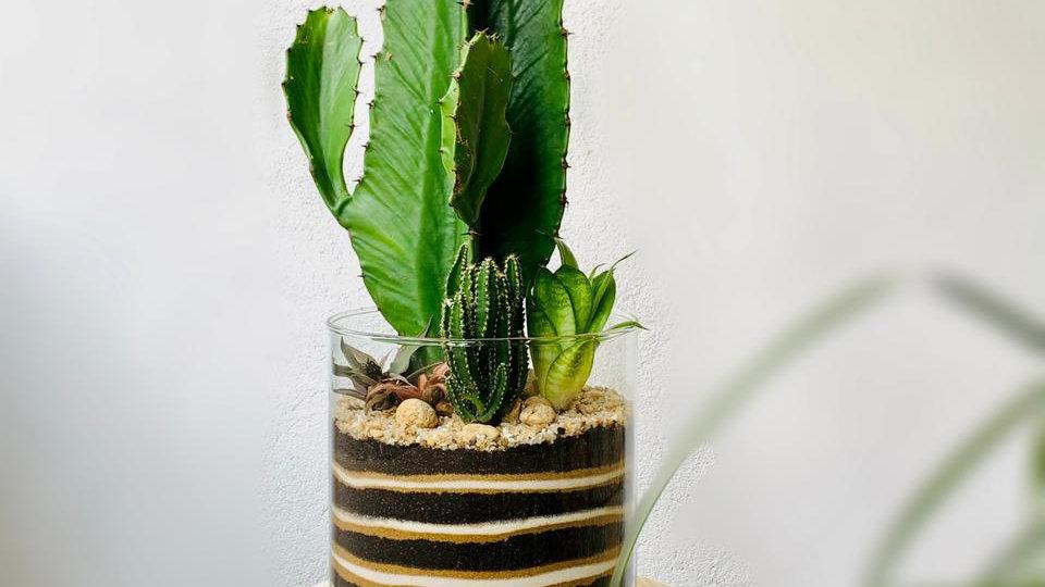 Vaso cilíndrico com Cacto