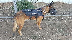 dog new1.JPG