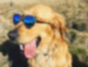 douglas atticus in sustainable sunglasse