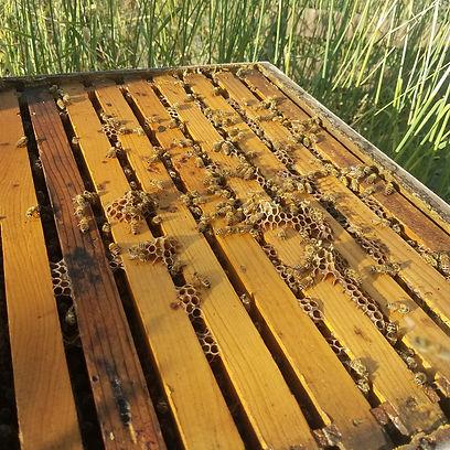 Handcrafted Honeys
