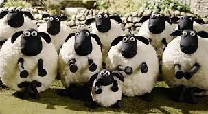 數綿羊可治失眠?