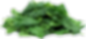 Spinach-PNG-Clipart.png