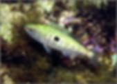 Морская рыбалка/Окунь